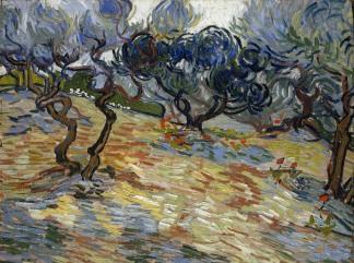 vincent van gogh-ulivi-1889 -324-241